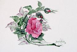 pink watercolor rose with buds